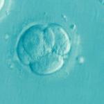 ADN mitocondrial del embrión y éxito de embarazo